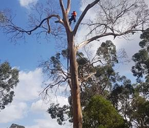 tree removal melbourne cost