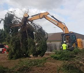 tree lopping Cranbourne
