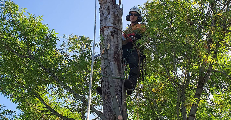 tree lopping Wantirna