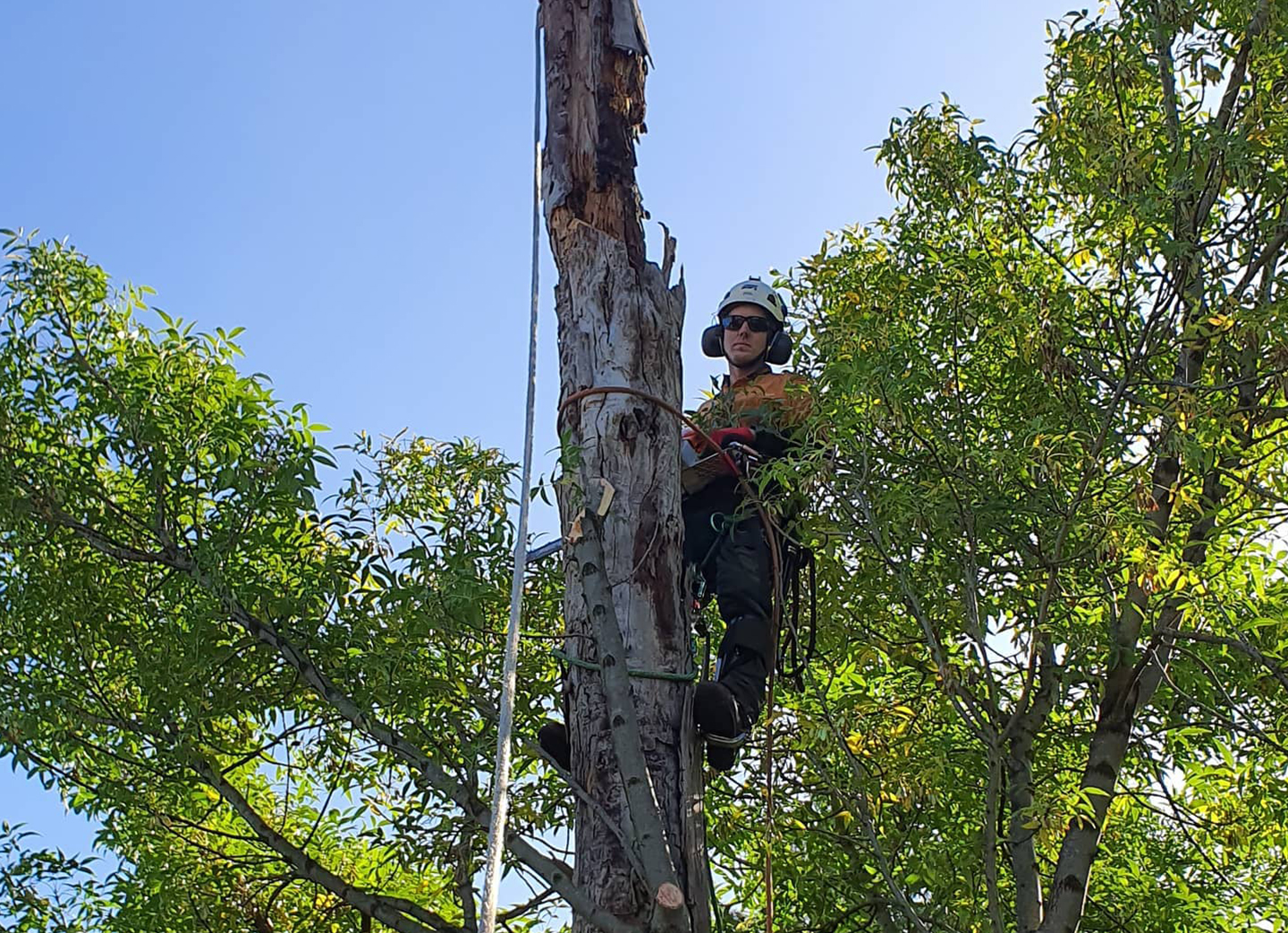 tree stamp removel melbourn