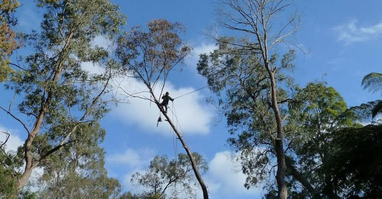 tree cutting Ferntree Gully